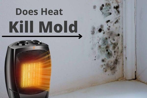 Does Heat Kill Mold